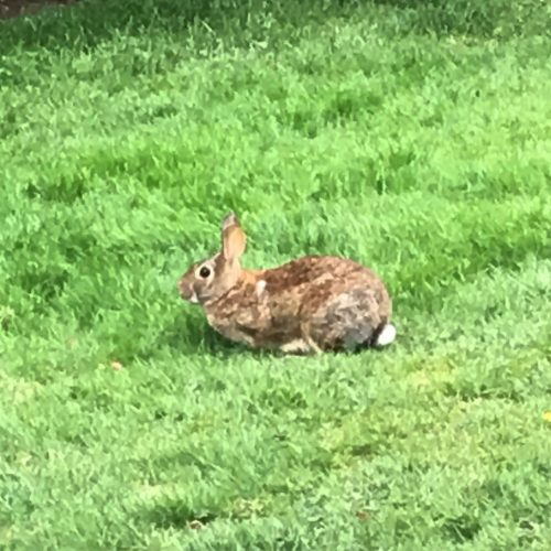 Guys its always a lucky day to see the rabbithellip