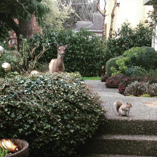 I love these guys squirrels deer