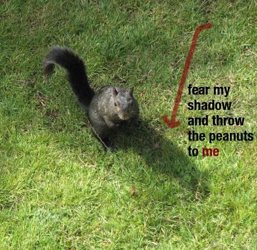 Squirrel Inspiration