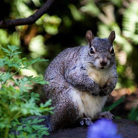 squirrel of the week squirrealism squirrelsofinstagram