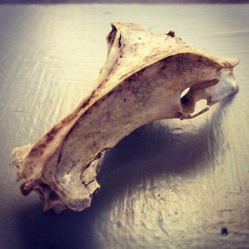 My awesome friend gave my a squirrel skull from herhellip