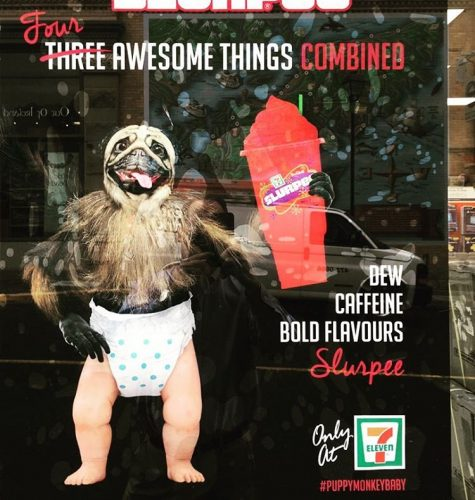 Going to give 7eleven some props for this gem pugbabyhellip
