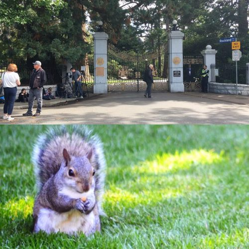 Secret squirrels at Government House today kensingtonroyal royaltourcanada royalvisitcanada