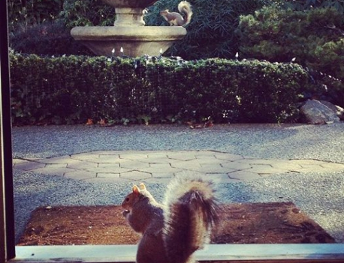 "The squirrels say, ""Au revoir 2014!"""