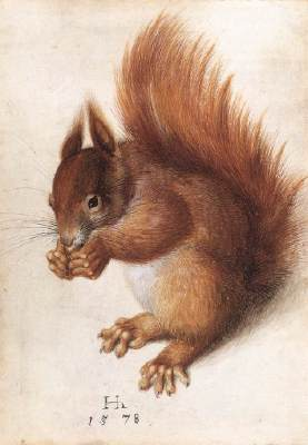 Squirrel 1578 Watercolour and gouache on parchment, 25,1 x 17,7 cm National Gallery of Art, Washington