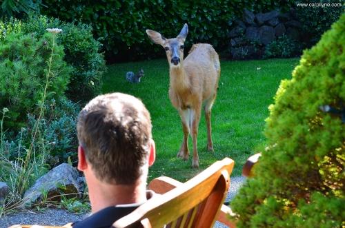 Deer saying hello, August, 2013