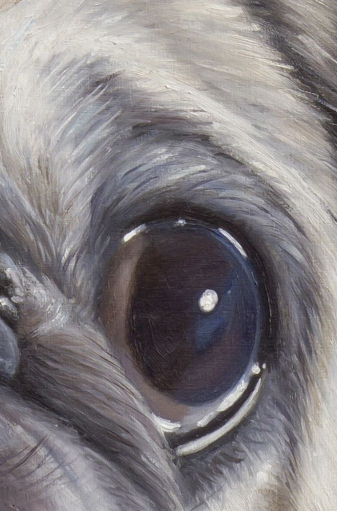 Lord Rocco The Pug - detail