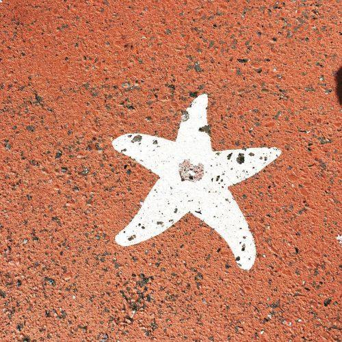 sign symbol starfish star fish carollyne carollyneyardley