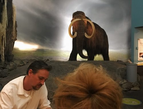 Gareth Gaudin, Perogy Cat, Squirrel, and the Woolly Mammoth at the Royal BC Museum.