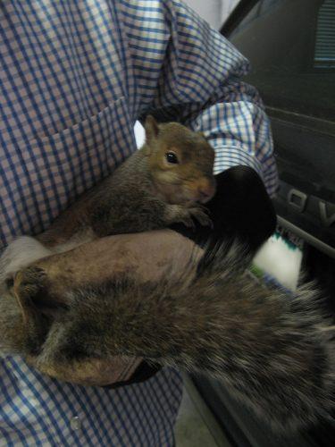 Injured Squirrel, December 2009
