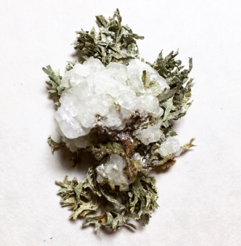 Salt and borax crystals, cypress tree, lichens. 2″ x 3″, 2019.