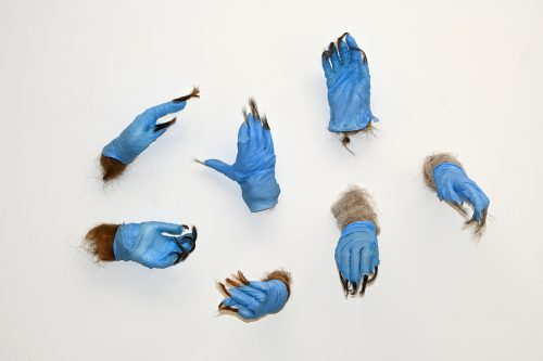 """Contagion from Sympoetics of Squirrealism series. Gifted: human hair. Foraged materials: used blue nitrile gloves. Resin, acrylic nails and armature (each hand 10"""" x 3"""" x 4""""), 25"""" x 32"""". Detail."""
