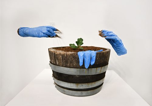 """Rituals of Care from Sympoetics of Squirrealism series. Garry oak seedling grown from foraged acorns, soil and oak barrel from garden (14"""" x 9"""" x 9""""). Gifted: Human hair. Foraged materials: used blue nitrile gloves. Resin, acrylic nails and armature"""