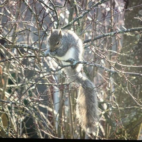 Christmas Day Squirrel. December 25, 2016