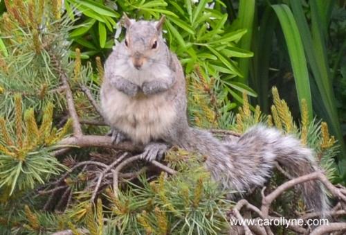 Squirrel in Eden, May 29, 2013