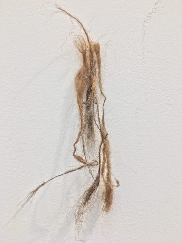 Holobionts 2019 detail. Squirrel hair, cat hair, magnolia petals, leaf skeleton, human hair, 30% wood fibre acrylic, wax, feather, oak tree branch, acorns.