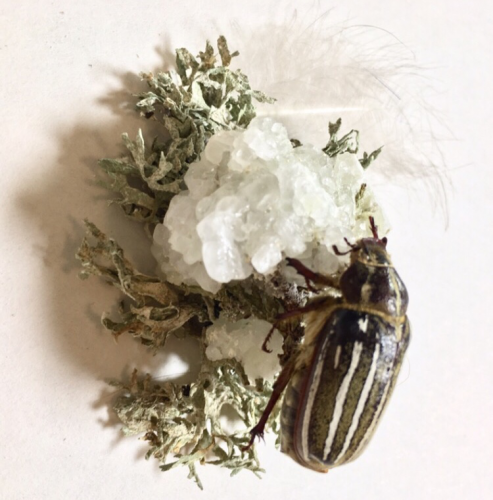 Peacock feathers, salt and borax crystals, cypress tree, lichens, ten-lined June beetle. 3″ x 3″, 2019.