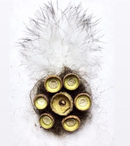 Peacock feathers, acorn cupule, squirrel hair, human hair, 3′ x 6′, 2019.