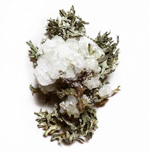Salt and borax crystals, cypress tree, lichens. 2″ x 3″, 2019.