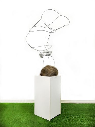 Collaboration with Black-tailed buck and his antlers during the rut, 2020 Installation view, tomato cage, deer hair, human hair, tape